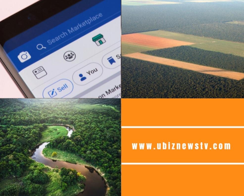 LA FORÊT AMAZONIENNE EN VENTE SUR INTERNET